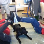 Klassengemeinschaft und Achtsamkeit stärken mit Schulhund Lia